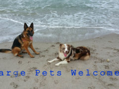 Hutchinson Island Pet Friendly Condos- Just Listed Ocean Bay Villas
